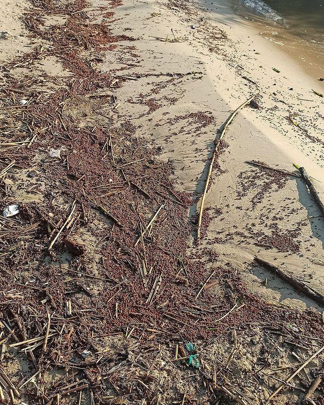 Сонечка: на березі моря